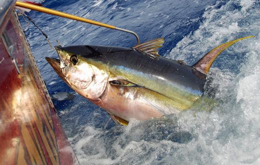 pesca-tonno